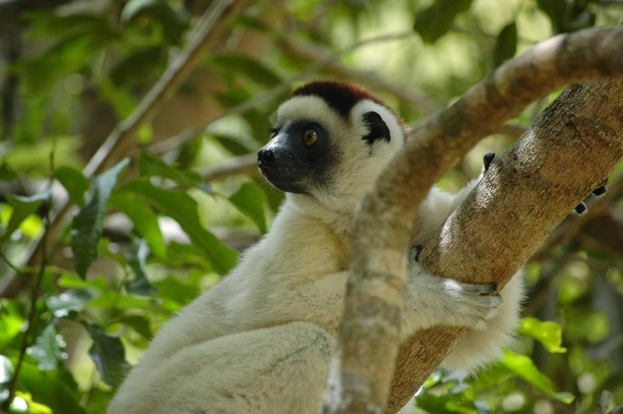 Les animaux à voir à Madagascar