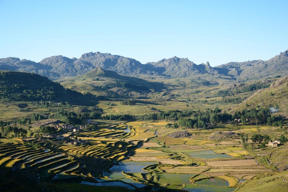 La rizipisciculture à Madagascar : une pratique qui devrait être une référence