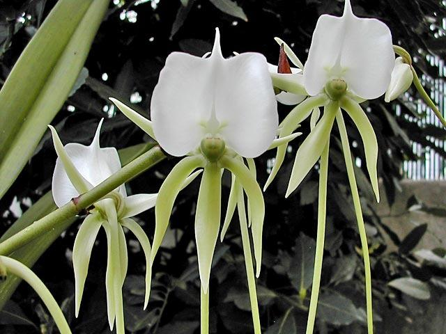 Madagascar : l'île aux orchidées