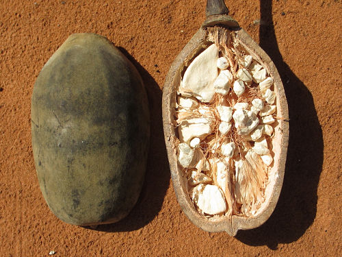 Les produits dérivés du Baobab